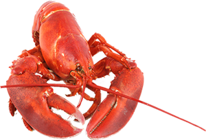 canadian-whole-lobster-transparent-background-2