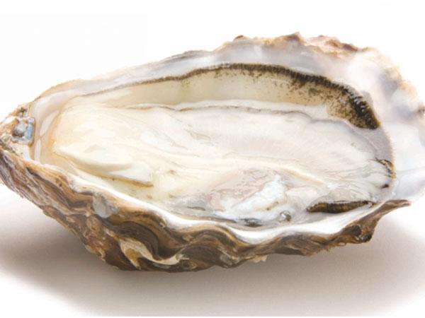 speciales-de-claire_gillardeau_oyster-2